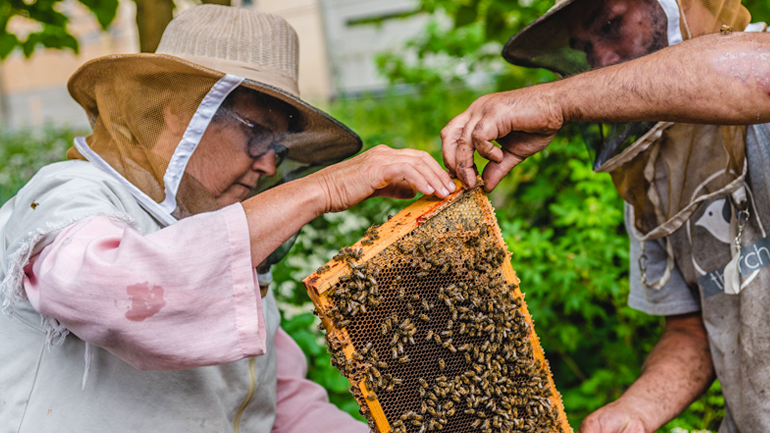 Hives for Humanity volunteers have an opportunity to build skills, gain meaningful experience and foster supportive relationships through the therapeutic beekeeping program.