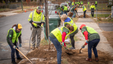 TD volunteers planting trees